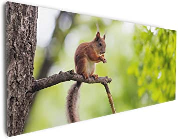 Wallario Premium Glasbild Eichhörnchen auf einem Ast squirrel Wald 125 x 50 cm