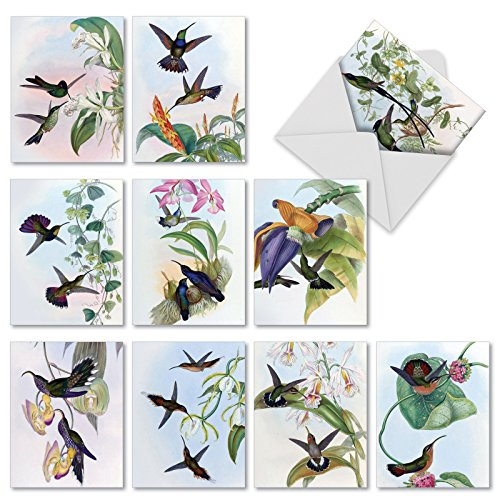 M9687OCB Humming Along: 10 Assorted Blank All-Occasion Note Cards Feature Beautiful Hummingbird Illustrations, w/White - A Nectar Order Card New