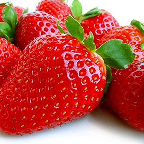 30 Albion Everbearing Strawberry Plants- Fruits Firm, Very Sweet, High Yields by MW105