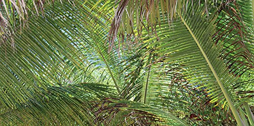 Beach Palm Canopy - 2ft x 4ft Drop Ceiling Fluorescent Decorative Ceiling Light Cover Skylight Film