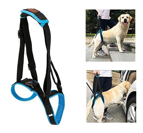 Arnés de apoyo para perros para patas traseras, soporte de ...
