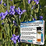 Western Spiderwort Seeds (Tradescantia occidentalis) 20+ Medicinal Herb Seeds + FREE Bonus 6 Variety Seed Pack - a .95 Value! Packed in FROZEN SEED CAPSULES for Growing Seeds Now or Saving Seeds
