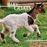 img - for Baby Goats Calendar 2017: 16 Month Calendar book / textbook / text book