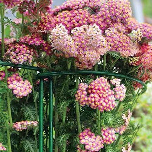 advancethy Staudenhalter Zaunpfosten Kleine Gartenpflanze Stützringe Für Clematis Rose Tomaten Gurke 2 Stücke Pflanzenhalter