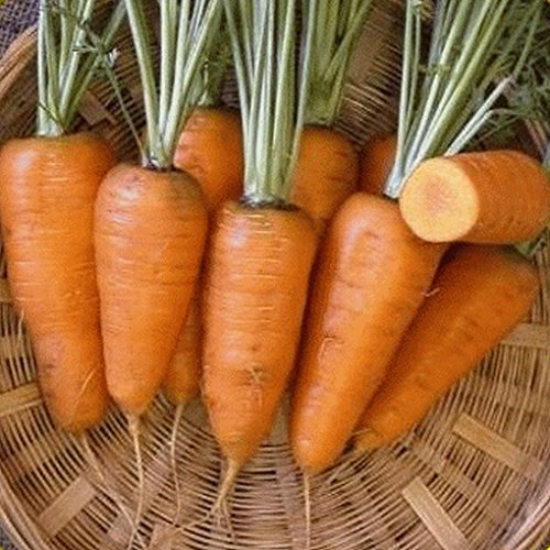 red carrots - 6