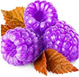 1000pcs rare raspberry seeds organic fruit seeds green red blue purple black raspberry seeds for home garden plant easy to grow purple