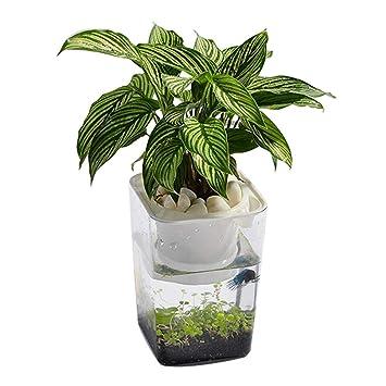 Bloomma Water Garden, Betta Fish Tank Que cultiva Plantas, Mini ecosistema acuapónico | Fish Feeds Las Plantas y Las Plantas limpian el Tanque: Amazon.es: ...