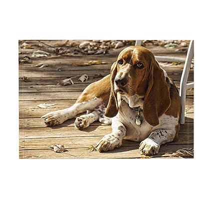 Amazon.com: NYMB Animal Decor Bath Rug By, Pet Dog Basset Hound And ...
