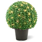 National Tree 22 Inch Mini Boxwood Ball Shaped Topiary Tree in Round Green Growers Pot and 70 Clear Lights (LBXM4-302-22)