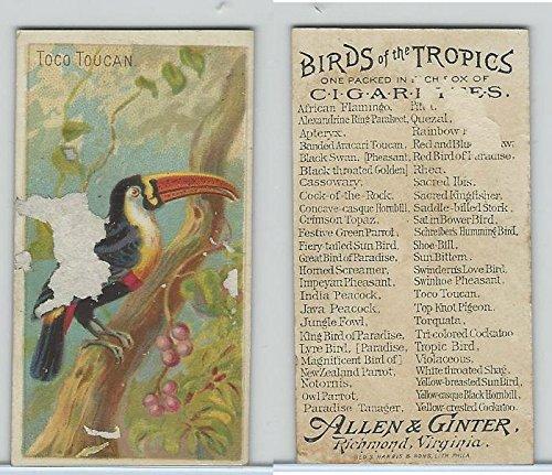 (N5 Allen & Ginter, Birds of the Tropics, 1889, Toco Toucan)