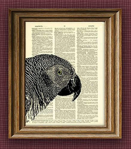 AFRICAN GREY PARROT beautifully upcycled vintage dictionary page book art print