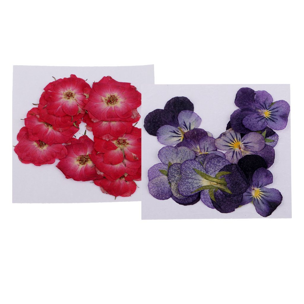 MagiDeal 22 Piece Pressed Natural Dried Flowers Real Flower Rose ...
