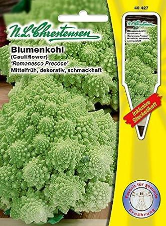 70 Pflanzen ca N.L.Chrestensen Saatgut Blumenkohl