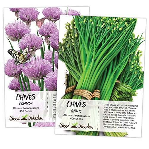 Seed Needs, Chives Seed Packet Duo (2 Individual Packets) Non-GMO ()