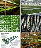 Aquaponics - Entrepreneurs Embrace Technology that Holds Key to Strengthening Local Food Systems and Increasing Food Security Pdf