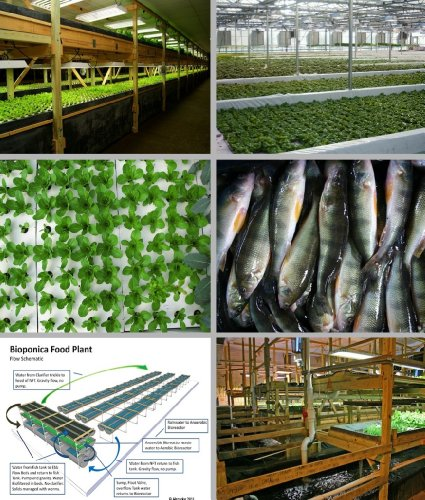 Aquaponics - Entrepreneurs Embrace Technology that Holds Key to Strengthening Local Food Systems and Increasing Food Security by [Clark, Melinda, Vernabe, Jessica, Puro, Robert, Krinn, Deanna, Swan, Noelle, Wilhalme, Matthew]