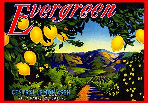 A SLICE IN TIME Villa Park Orange County California Evergreen Brand Lemon Citrus Fruit Crate Box Label Art - Crate Vintage Fruit