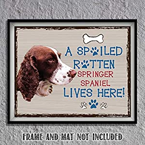 """Springer Spaniel-Dog Poster Print-10 x 8"""" Wall Decor Sign-Ready To Frame.""""A Spoiled Rotten Springer Spaniel Lives Here"""". Pet Wall Art for Home-Kitchen-Garage. Gift-English Springer Spaniel Owners! 1"""