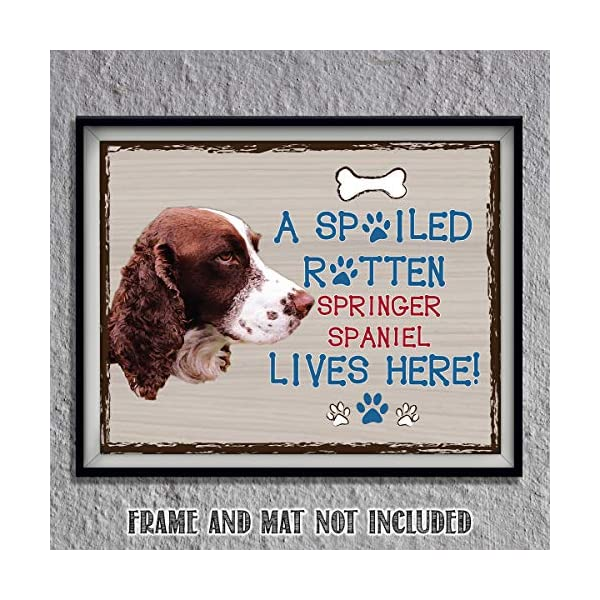 "Springer Spaniel-Dog Poster Print-10 x 8"" Wall Decor Sign-Ready To Frame.""A Spoiled Rotten Springer Spaniel Lives Here"". Pet Wall Art for Home-Kitchen-Garage. Gift-English Springer Spaniel Owners! 1"