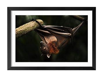 Amazoncom Bat Animal Picture Art Print Home Decor Wooden Frame