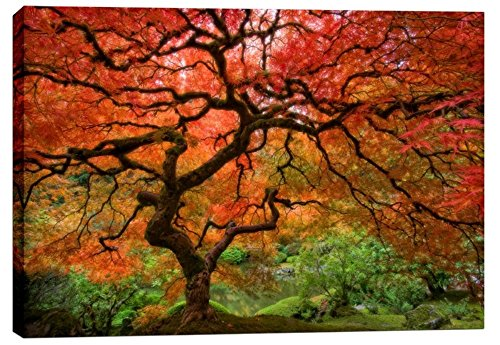 i Home Japanese Maple by Jesse Estes, Gisele Canvas Wall Art, 26