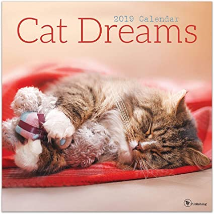 Calendario de pared para gatos con sueños de gato, varios colores: Amazon.es: Oficina y papelería