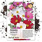 Seed Needs, Cosmos Sensation Mixture (Cosmos bipinnatus) 400 Seeds