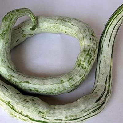 MelysUS Garden-30pcs Perennial Bonsai Mini Snake Gourd Seeds Bonsai Outdoor Plant Seeds Flowers : Garden & Outdoor