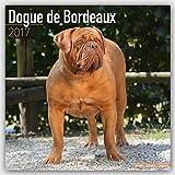 Dogue De Bordeaux Calendar 2017 - Dog Breed Calendars - 2016 - 2017 wall calendars - 16 Month by Avonside