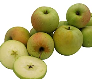 Kauffman Orchards Homegrown Crispin Apples, Jumbo Size, Fresh-Picked in Lancaster County, Pennsylvania (Box of 8)