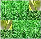 1 oz - Bermuda Grass Seed - Lawn Grass Seeds - HARDY ZONES 7 - 10