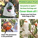 AllwaySmart 100 Fruit Protection Bags from Birds