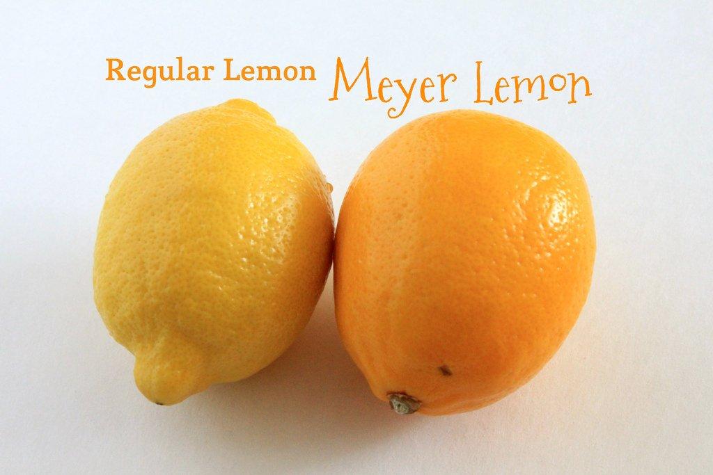 Meyer Lemon Tree, 1 to 2 Feet