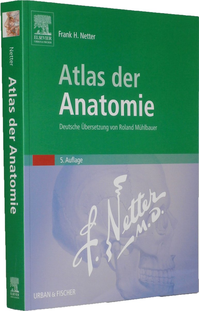 Großzügig Anatomie Und Physiologie Für Die Sprach Sprache Und Hören ...