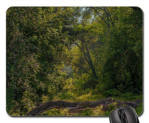 Mouse Pad - Landscape Balance Beam Forest Trees Morning