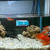 Neptonion Magnetic Aquarium Fish Tank Glass Algae