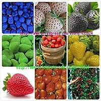 9kinds de semillas de la fresa, blanco, amarillo, azul, negro, rojo, verde, grandes fresas, subida, 900 semillas totales…