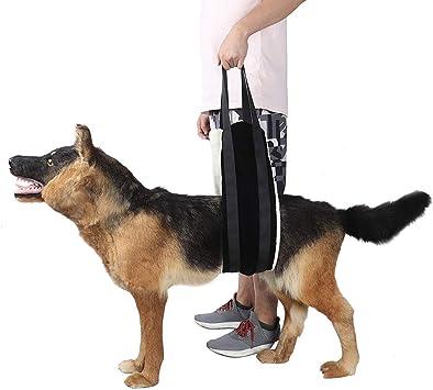 chengsan Arnés de elevación para Perro, Ayuda a la Movilidad del ...