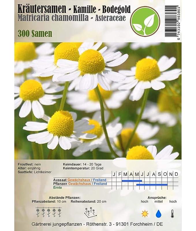 verschiedene Sorten Matricaria recutita Kräutersamen Kamille