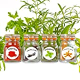 : New - 50 Washable Plastic Herb and Spice Jar Labels. Colourful, Attractive Pictures of 50 Herbs And Spices.