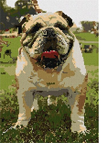 English Bulldog Needlepoint Kit Bulldog Needlepoint