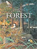 Day and Night in Forest, Susan Barrett, 084370943X