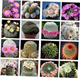 KRN 10 Seeds Mammillaria Mix Succulent - LY279