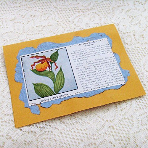 Yellow Lady's Slipper  Moccasin Flower Orchid Card / ME2Designs Handmade Wild Flowers of America Card