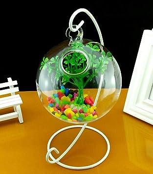 JIANGU - Pecera Colgante de Cristal Transparente (tamaño pequeño ...