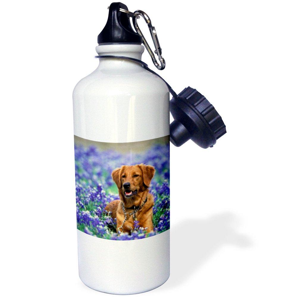 3dRose wb/_94593/_1Texas White Texas Blue Bonnets US44 TVE0015 Tom Vezo Sports Water Bottle Texas Blue Bonnets US44 TVE0015 Tom Vezo Sports Water Bottle 21 oz Golden Retriever dog