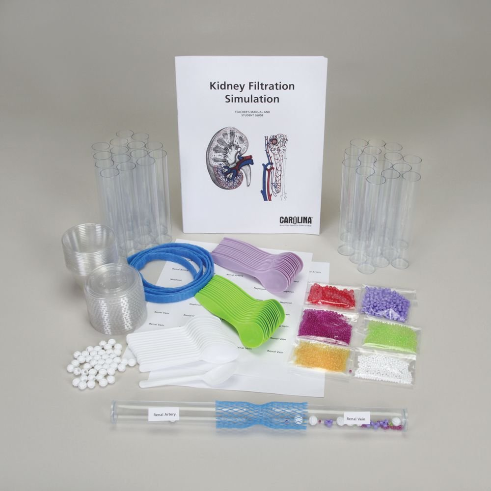 Kidney Filtration Simulation Kit Amazon Industrial Scientific