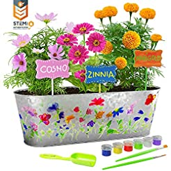 Dan&Darci Paint & Plant Flower Growing K...
