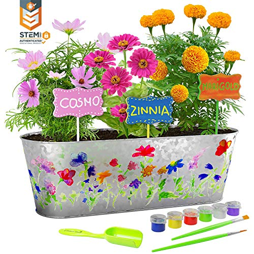 Dan&Darci Paint & Plant Flower Growing Kit - Grow Cosmos, Zinnia, Marigold Flowers - Includes Everything Needed to Paint and Grow - Great Gift for Children STEM ()