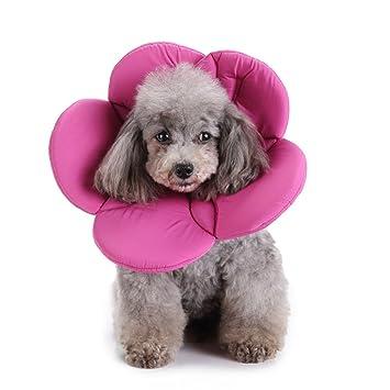 Amazon.com: berteri collar isabelino perro, mascota ...